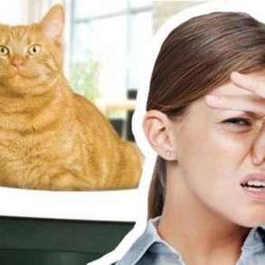 Устранение запахов от домашних животных. Озонирование, в Тюмени