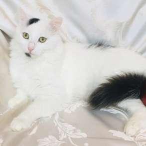 Роскошный котик Балу в поисках семьи, в Москве