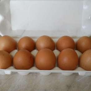 Продаю яйца куринные, в Сергиевом Посаде
