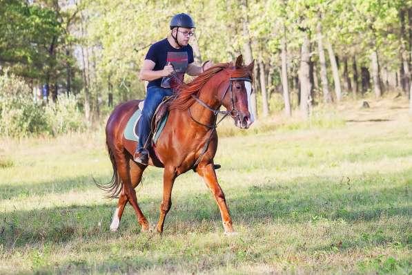 Уроки верховой езды.Обучение детей и взрослых. в Нижнем Новгороде фото 4