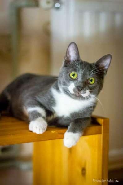 Отдам даром Грёма, котик 1 год, в поисках дома