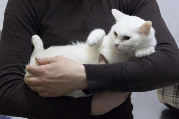 Прекрасная кошка по имени Сага в добрые руки! в Москве фото 5