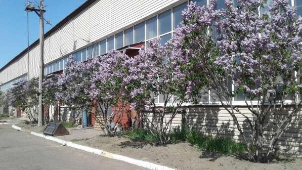 Складское помещение, 6000 м² в Улан-Удэ фото 4