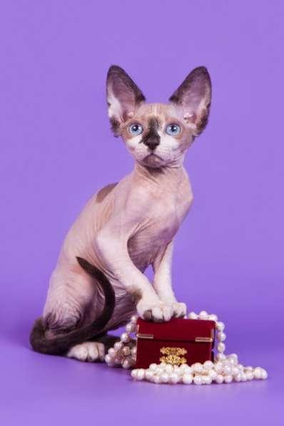 Волшебный котёнок сфинкс с другой планет в фото 6
