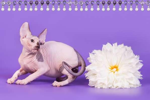Бархатный котёнок с чувственной душой. в фото 6