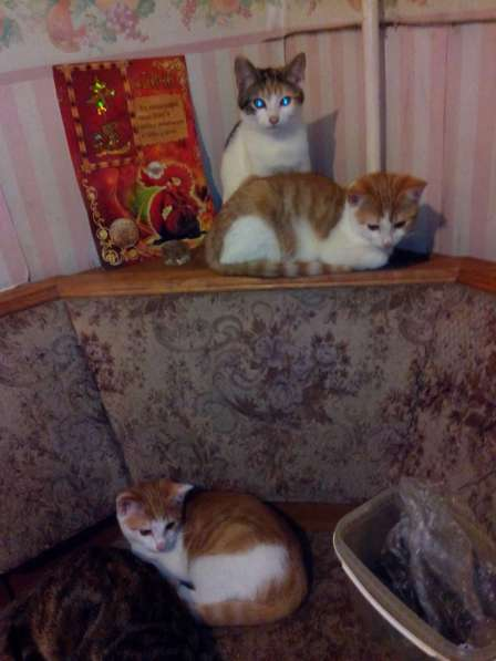 Котята домашние