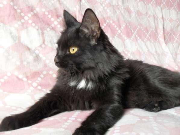 Котик с трудной судьбой ищет свой дом