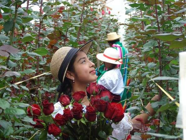 Цветы напрямую от плантаций Эквадора от 1 коробки в Москве фото 16