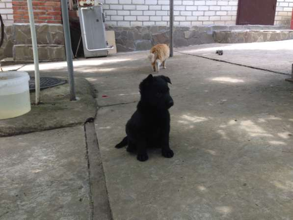Продажа щенка