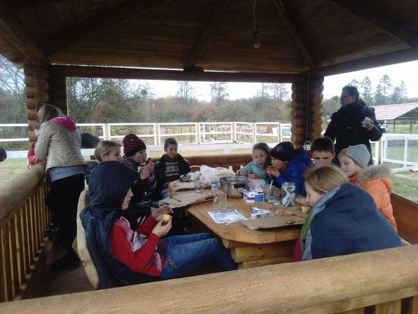 Туры для детей на пони ферму. Полесск. в Калининграде фото 3