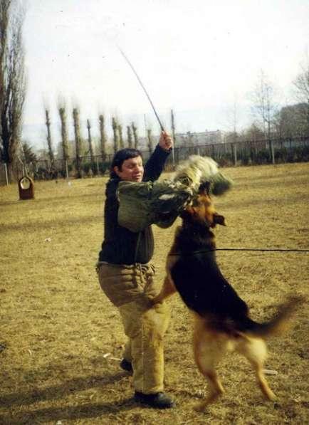 Обучаю собак по ЗКС и ОКД профессионально