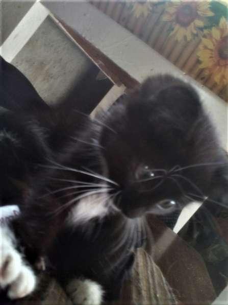 Отдам котенка в Пензе фото 3