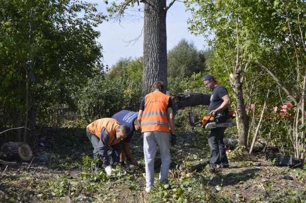 Устранение спиливанием старых деревьев