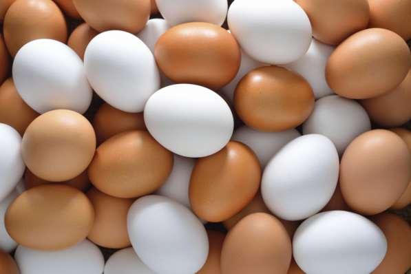 Яйцо в Нижнем Новгороде