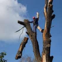 Спил аварийных деревьев, в Новоуральске