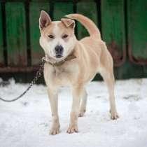 Отличный охранник, молодой домашний пес Алекс в добрые руки, в г.Москва