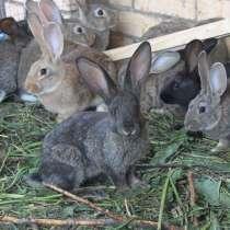 Кролики, в г.Волоколамск