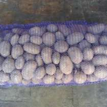 Куплю картофель от 20 тонн., в г.Могилёв