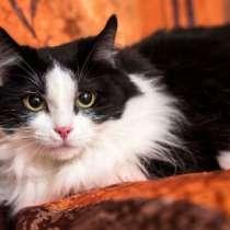 Отдам даром Лола самая ласковая кошка на свете в дар, в г.Москва