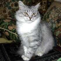 Отдам даром Красавица Пальмира, молодая кошечка, в г.Москва