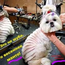 Летние стрижки собакам и кошкам. Уже давно пора, в г.Днепропетровск