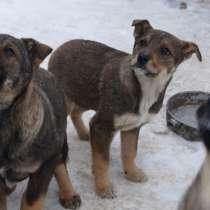 Три щенка ищут дом!, в Жуковском