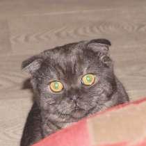 Потерялся кот, в Кемерове