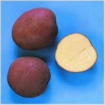 Семенной картофель из Беларуси, в г.Смоленск