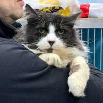 Очень харизматичный особенный котик Саша ищет дом, в г.Москва