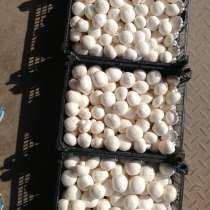 Купим свежие, маринованные грибы, в Брянске