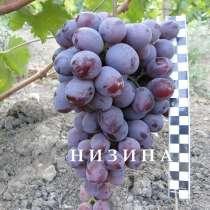 Продам саженцы и черенки винограда, в Нижнегорском