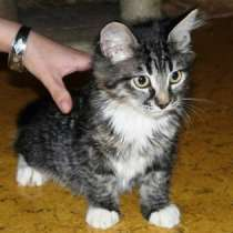 Отдам даром Домашние котята-подростки в дар, в г.Москва
