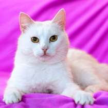 Волшебный кот Альбус в дар добрым людям, в Москве