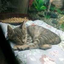 Маленькое чудо, особенный котенок Тимоша ищет дом, в г.Москва