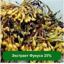 Оптом и розницу Экстракт Фукуса 25%, 1 кг, в г.Киев