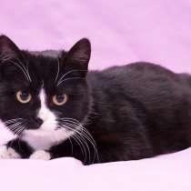 Плюшевый котенок, Яна ищет дом, в Москве