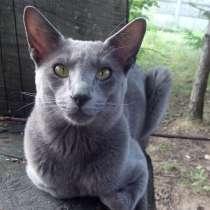 Продается ориентальный кот, в г.Минск