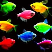Аквариумные рыбки в ассортим. Приезжайте или доставим, в Челябинске