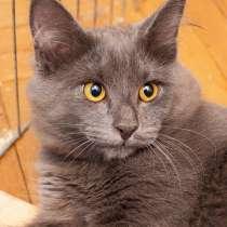 Чудо-мальчик Кузенька, нежный,ласковый котик-подросток в дар, в г.Москва