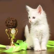 Котик белый зеленоглазый, 2 котика Красный мрамор, кошечка, в Москве