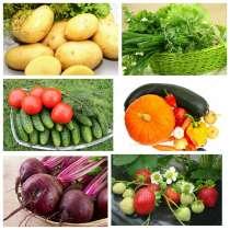 Овощи из своего хозяйства, в г.Санкт-Петербург