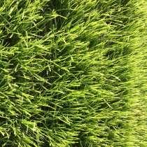 Семена многолетних газонных трав (отдельные виды), в Ростове-на-Дону
