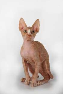 Котёнок для любви, в Саратове