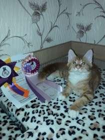 Продам котенка Мейн кун. С документами, в г.Алматы
