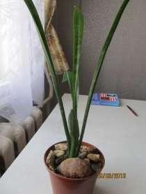 Комнатные растения, в Иркутске