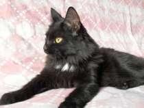 Котик с трудной судьбой ищет свой дом, в Нижнем Новгороде