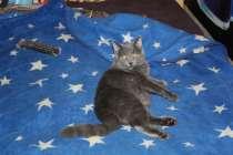Котик на час, в Мытищи