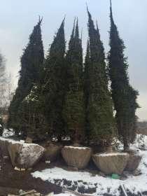Посадка деревьев, в Челябинске