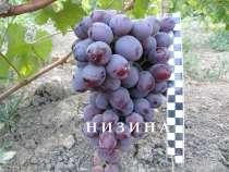 Продам черенки винограда, в г.Симферополь