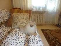 Продаю собачку шпиц мальчик 5месяцев, в Хабаровске